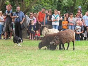 práce pasteveckých psů