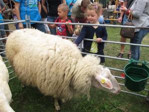 výstava ovcí a koz