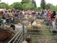 Výstava oveček