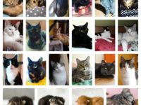 Kočičí večer: Poznejte Kočky ČB
